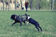 dogs-925701_960_720