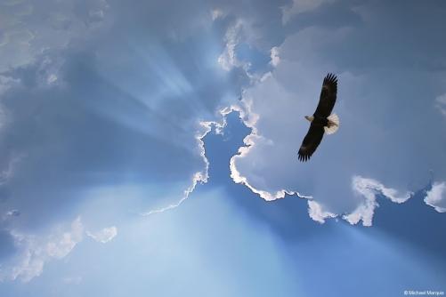 mm__soaring_eagle